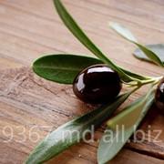 Черные оливки фото