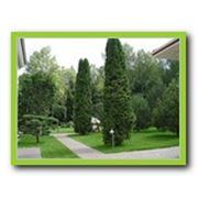 фото предложения ID 330714