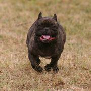 Корректировка поведения агрессивных собак