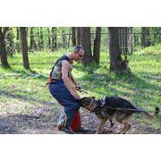 Помощь в приобретении собак фото