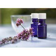 Гомеопатия. Медицинские услуги. фото