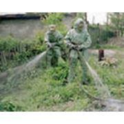 Дезинсекция удаление вредных насекомых из древесины фото