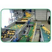 Оборудование для переработки овощей Подробнее: фото