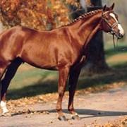 Лошади для выездки фото