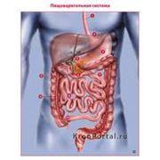 Лечение заболеваний желудочно-кишечного тракта фото