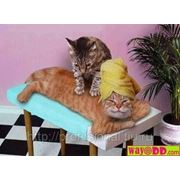 Лимфодренажный массаж(снятие отеков, чувство тяжести в ногах) фото