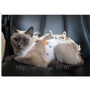 Стерилизация кошки на дому фото