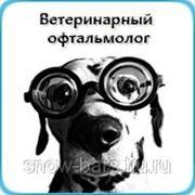 Ветеринарная офтальмология фото