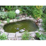 Пруд садовый фото