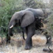 Тур ЮАР - Замбия - Ботсвана - Маврикий фото