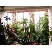 Зимние сады фото