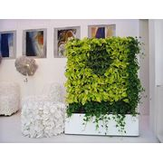 Вертикальное озеленение - фитопанели фото