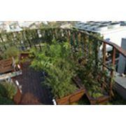Сады на крыше фотография
