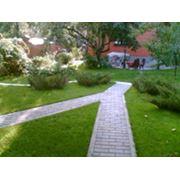 Озеленение домов. фото