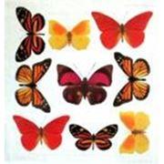 Прозрачный пластик с печатью Желтые бабочки фото