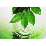 Работа по развитию экологического образования фото