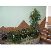 Фитодизайн офисов фото