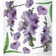 Прозрачный пластик с печатью Орхидея фото