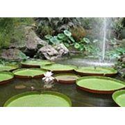 Проектирование прудов и водоемов фото
