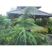 рулонный и посевной газон подготовка территории разбивка элементов сада фото