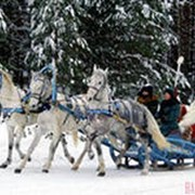 Дед Мороз на тройке лошадей фото