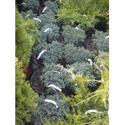 Деревья кустарники лианы травянистые и цветущие многолетники однолетники фото