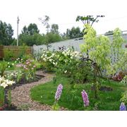 Рассада цветов для сада фото