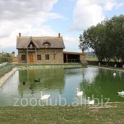 Зоны отдыха, базы отдыха в Молдове фото