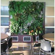Озеленение квартир фото