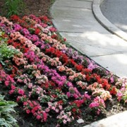 Оформление цветников фото