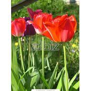 фото предложения ID 349070