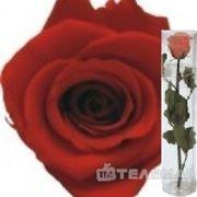 Telemag Стабилизированный цветок роза,мини. Цвет красный. фото