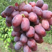 Виноград из Ирана фото