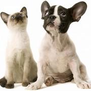 Ветеринарные услуги, Жлобин фото
