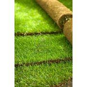 Рулонный газон фото