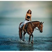 Конные прогулки, заказ саней, кареты, верховых лошадей, обслужевание торжеств и праздников фото