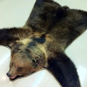 Ковёр из шкуры медведя 160 см фото