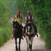 Подарочный сертификат - Прогулка на лошадях шервудский лес для двоих фото