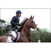 Катание на лошади фото