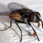 Уничтожение мух, Алматы, в Алматы фото