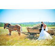 Прокат, лошади, карета, верховая езда, обучение фото