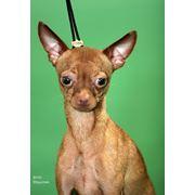 Вязка собак фото