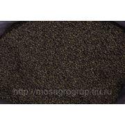 Семена люцерны Вега-87 (Alfalfa Seeds) фото