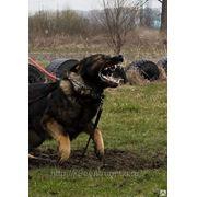 Коррекция проблем в поведении собак в Саратове. фото