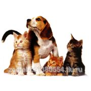Гостиница для домашних животных фото