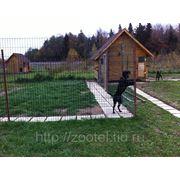 Гостиница для собак фото