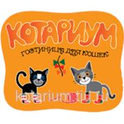 """Гостиница для кошек """"Котариум"""" г.Петрозаводск. фото"""
