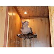 Баня для кошек фото