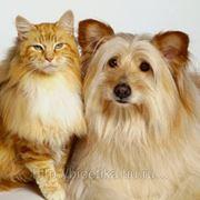 Стрижка кошек и собак, груминг в Челябинске фото