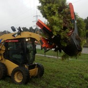 Пересадка деревьев (в том числе крупномеров) фото